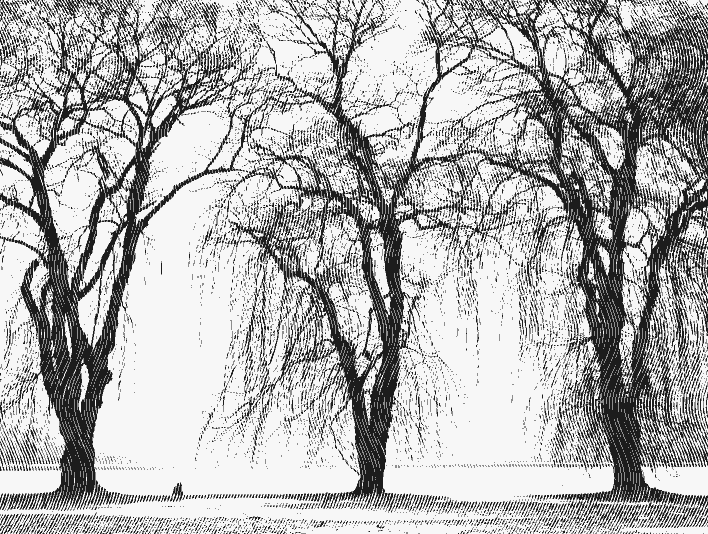 Vertical Engrave Trees By Lake