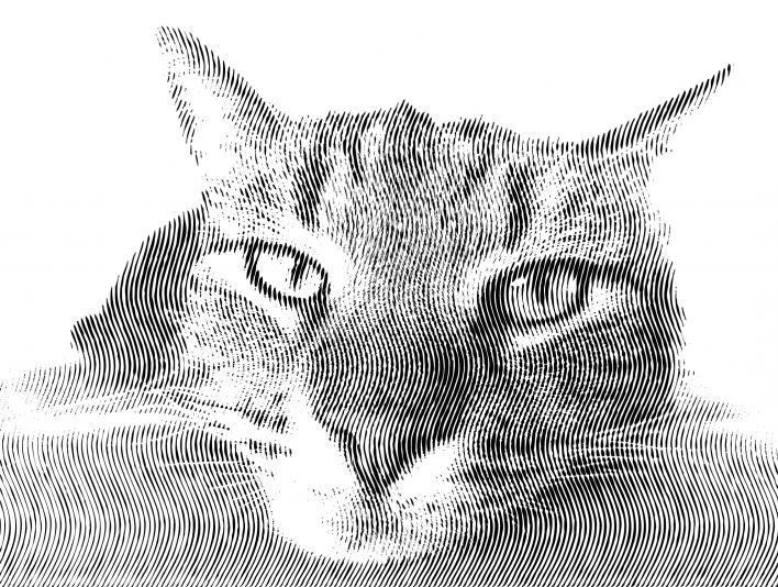 Vertical Engrave Judgemental Lazy Cat Face