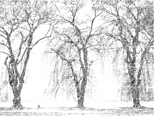Stipplr Trees By The Lake In Fall
