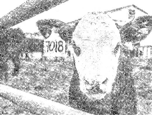 Stipplr Beef Looks Like Cow