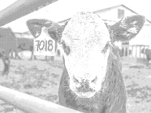 Stipplr Photoshop Vector 45 Degree Benday Dot Cattle Farm