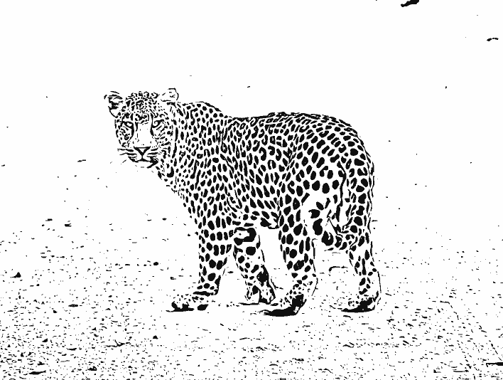 Stipplr Photoshop Vector Trace Leopard Crossing Dirt Road