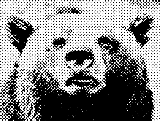 Stipplr Screentone Photoshop Vector Tracing Brown Bear Face