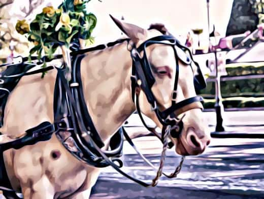 Stipplr Photoshop Scanner Darkly Action Horse And Carriage