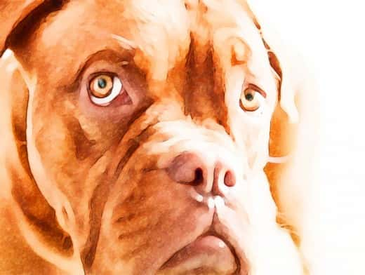 Stipplr Photoshop Water Color Action Orange Pitbull