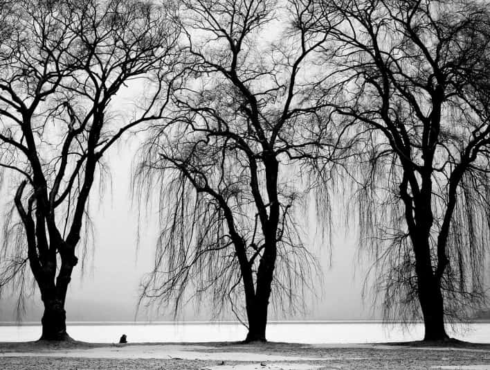 Stipplr Stock Photo Man with eazel sitting by the lake surrounded with trees and light snow