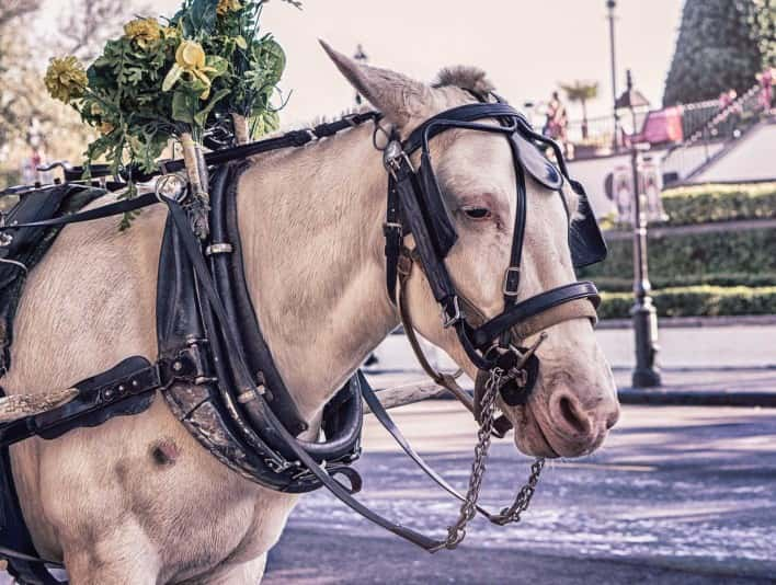 Stipplr Stock Photo White Horse and Drawn Carriage Waiting for Tourists